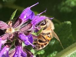 Bee u tee full