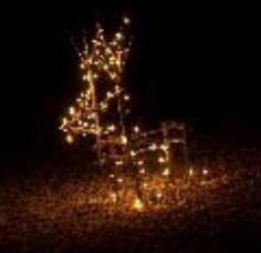 Reindeer Lighting Event